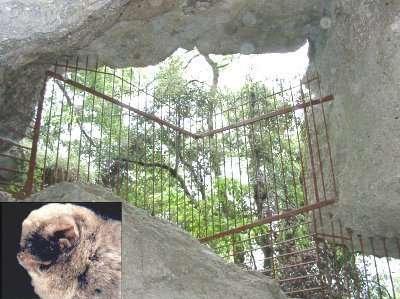 Grille d'une cavité naturelle abritant des minioptères (en écusson). Un espace libre est laissé au-dessus, pour que les animaux puissent circuler. La photo a été prise lors d'un contrôle des effectifs. (Photo Laurent Petter)